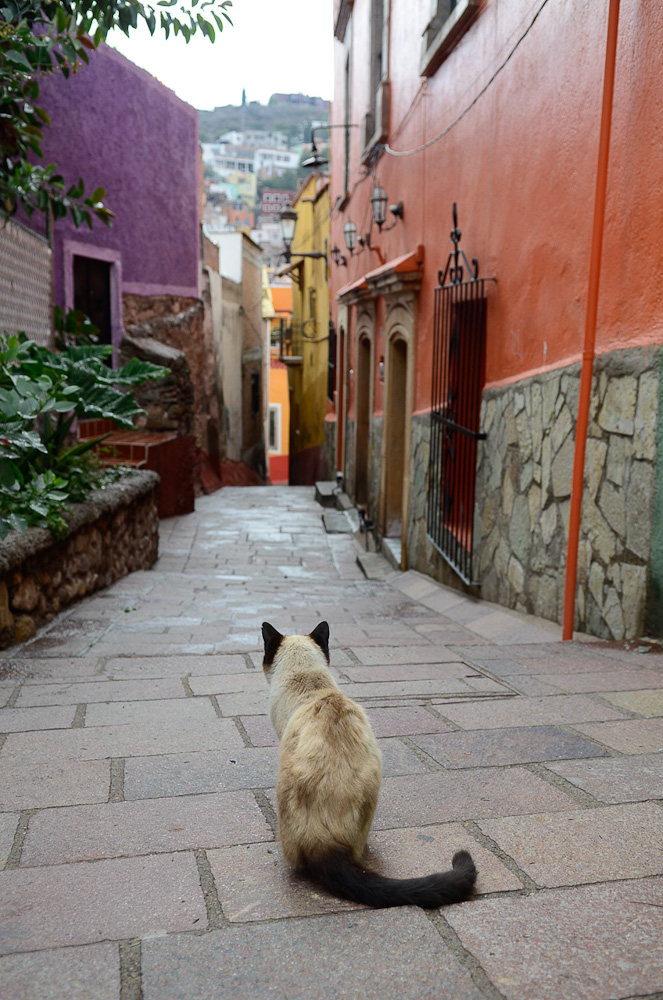 Siamese alley by Winnipeg travel photographer