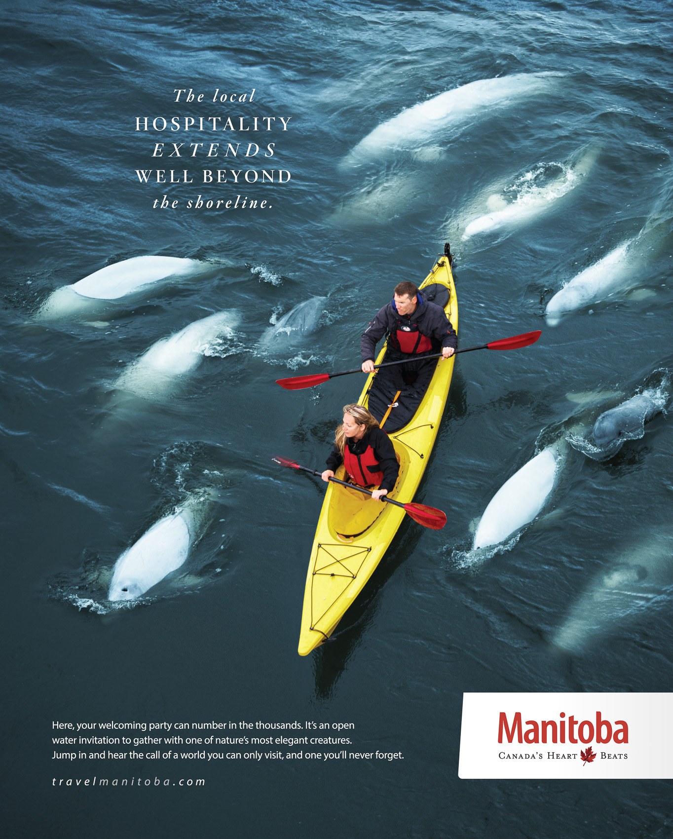 Travel Manitoba belugas.  Photography by Thomas Fricke, Winnipeg commercial photographer.  Concept by McKim.